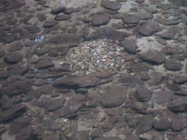 pisgah nest